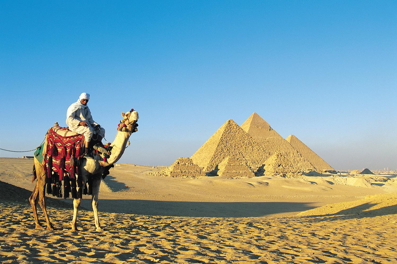 Egypt - camel in front of pyramids