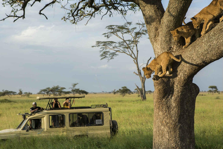 Africa Tanzania Serengetti Lions G Adventures