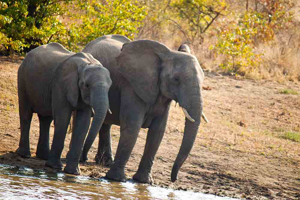 Dhow safari
