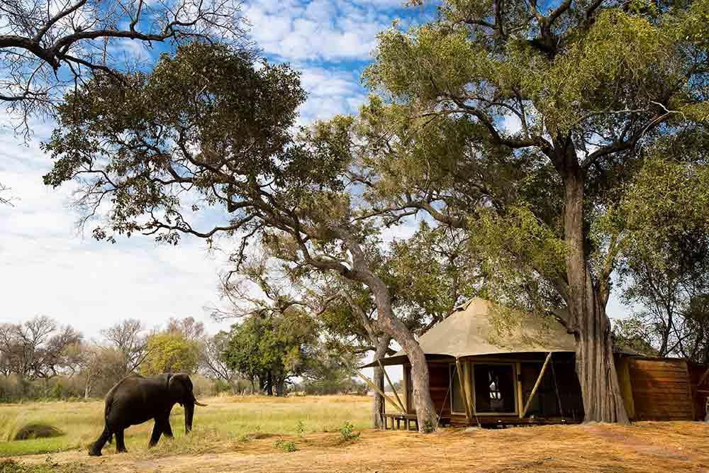 Xaranna elephant safari