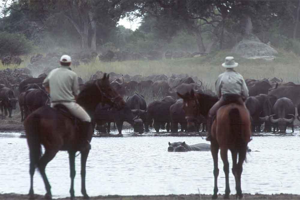 Horse riding safari