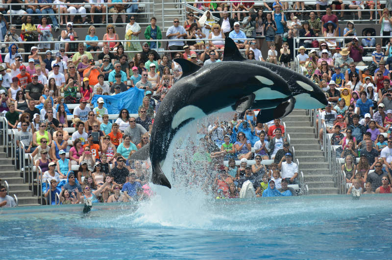 SeaWorld plans orca display changes