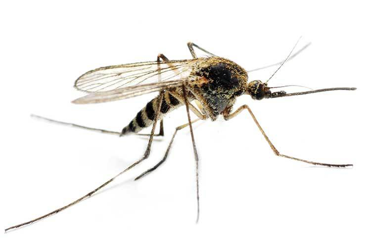 Trade reacts to global fears of Zika outbreak