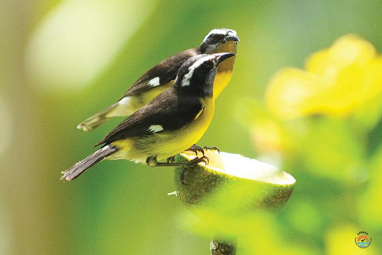 Birdwatching hotspot