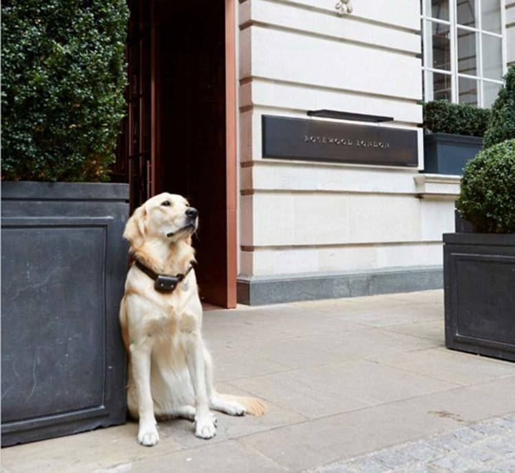 Pet-friendly hotels get the paws-up from PetsPyjamas