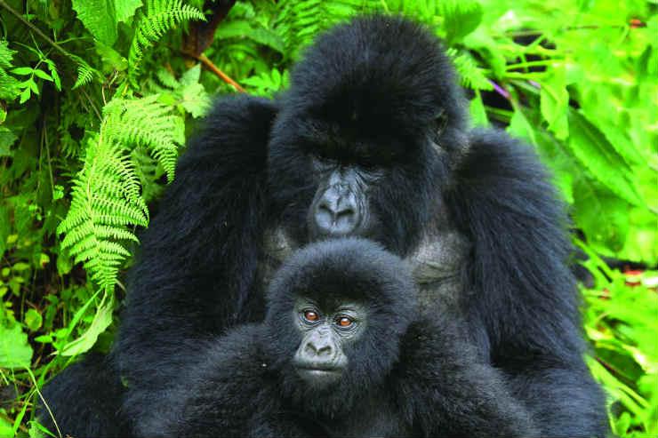 Going wild in Uganda