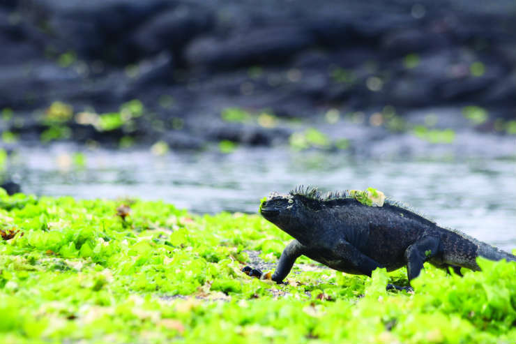 Galapagos galore: Cruising the magical archipelago