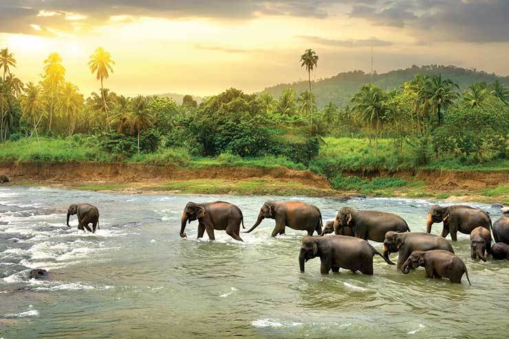Elephants crossing the river in Sri Lanka iStock_83566505