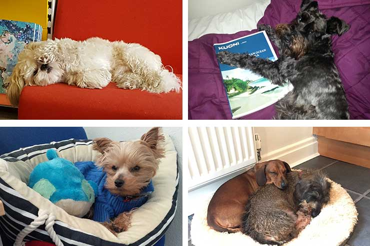 It's a dog's life for these travel agency pooches