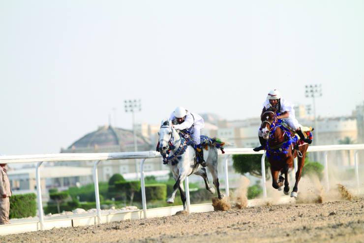 Qatar for sports fans