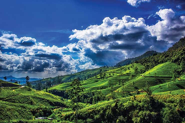 Sri Lanka iStock-540382128