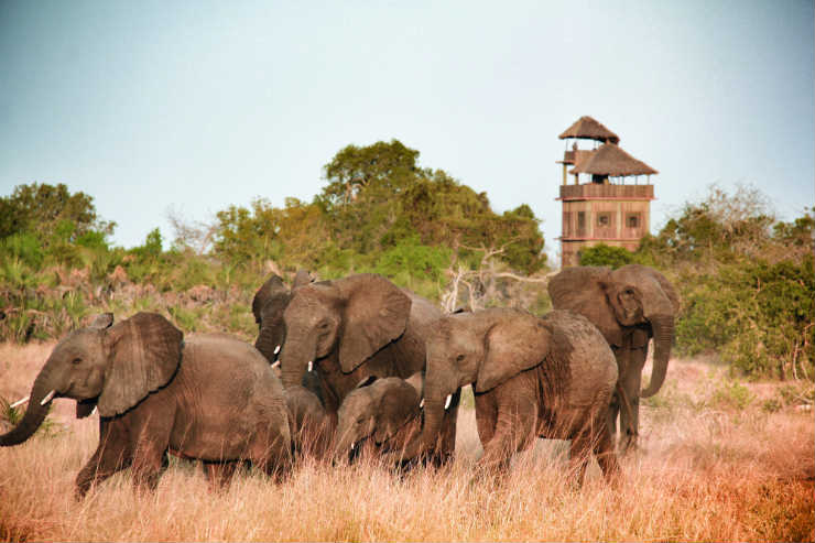 How Many Elephants fears dwindling tourism revenue could limit efforts to fight elephant poaching