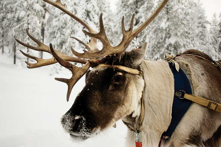 Lapland top winter destination