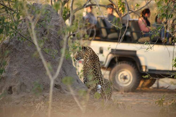web-Leopard.jpg