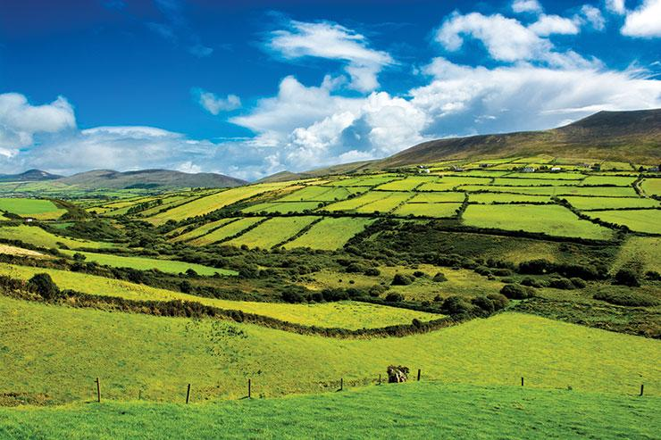 Ireland-fields.jpg