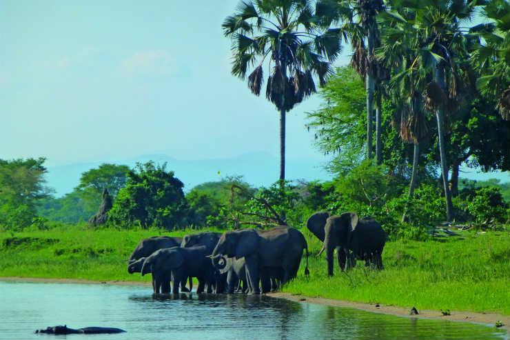 Malawi wildlife