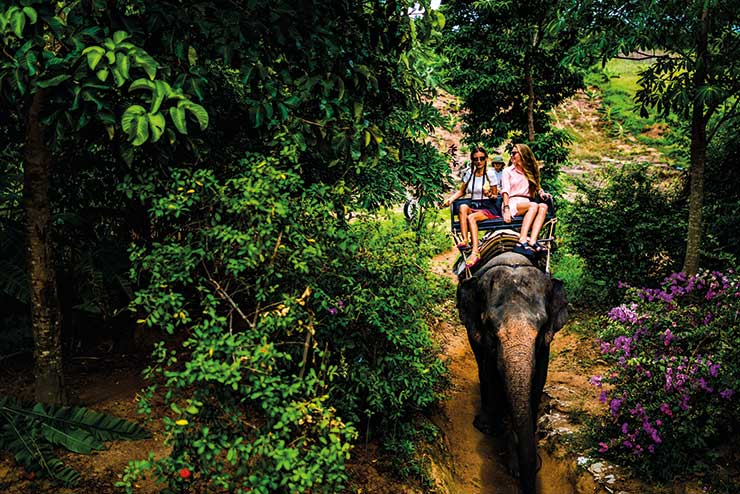 Riding an elephant through the jungle