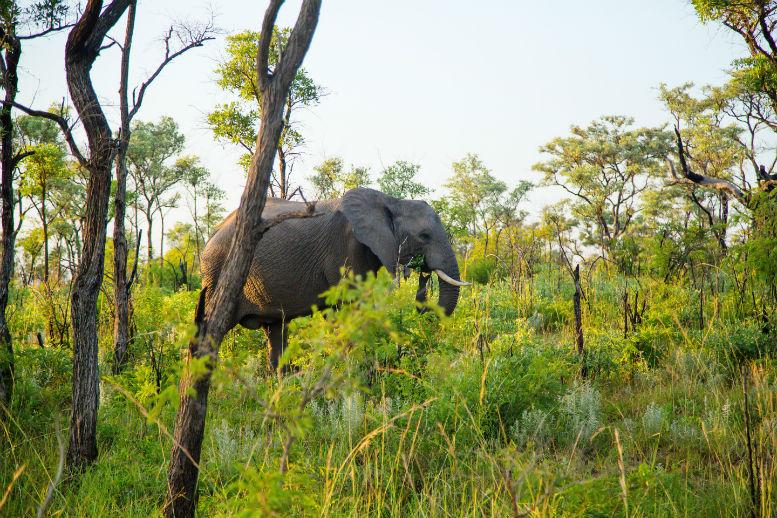 Kruger National Park_SAfrica.jpg