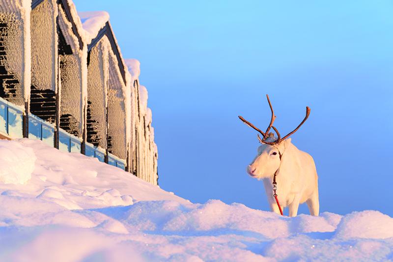 Santa's Lapland cancels December trips