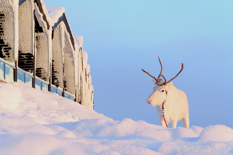 Soaring Lapland demand fuels bumper Christmas flight schedule at Gatwick