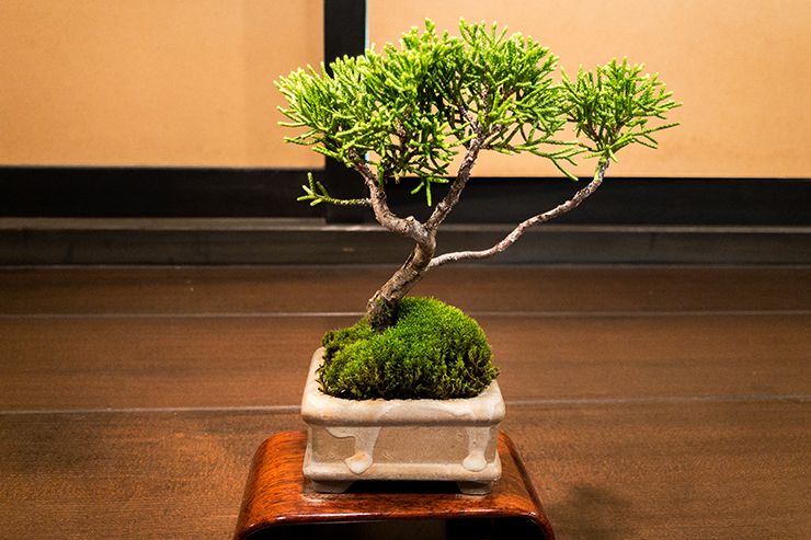 8. Bonsai and flower art