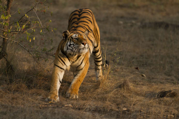 Top wildlife experiences in Sri Lanka and India