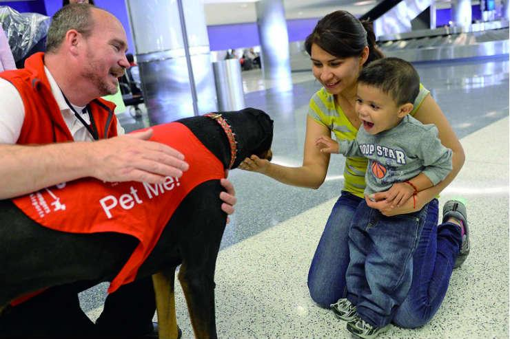 Therapy dog at LAX Airport