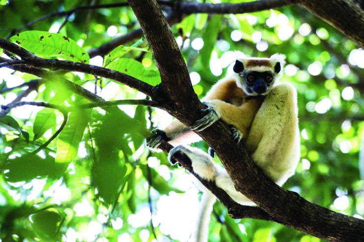 Meet Madagascan wildlife