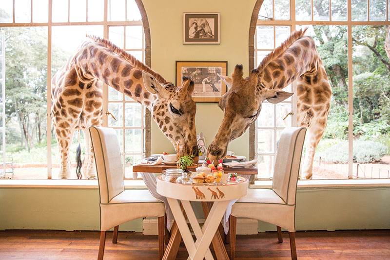 The manor in the wild, Nairobi, Kenya