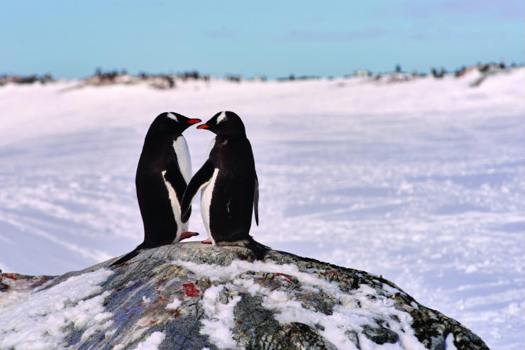 Penguins in Antartica .jpg