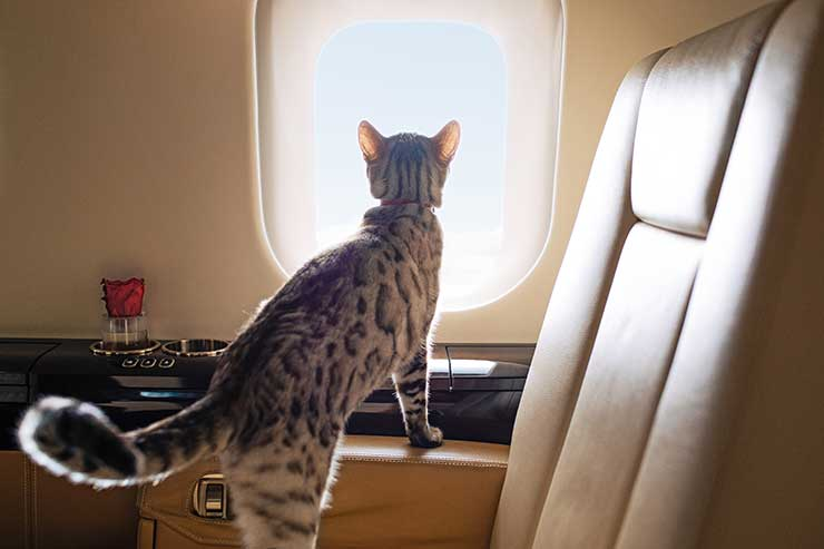 VistaJet Minnie the cat onboard