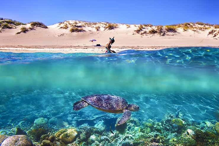 Ningaloo Reef Coral Coast.jpg
