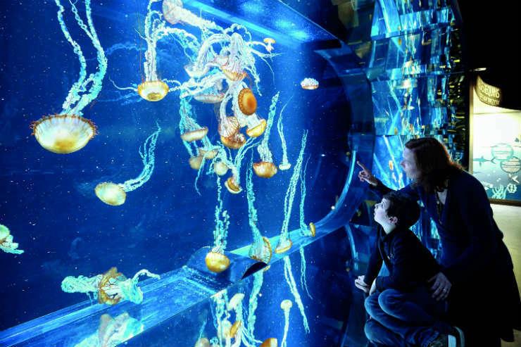 Family at Nausicaa aquarium in France