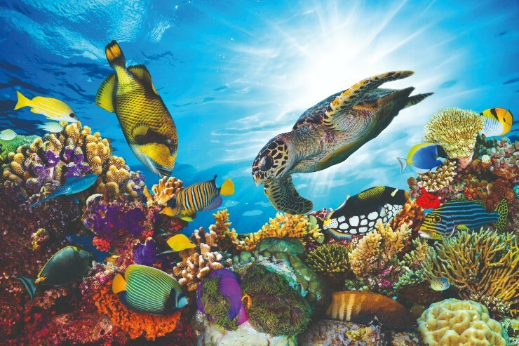 Tropical fish and turtles swimming in the Maldives