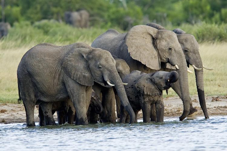 Hwange National Park, Zimbabwe1.jpg