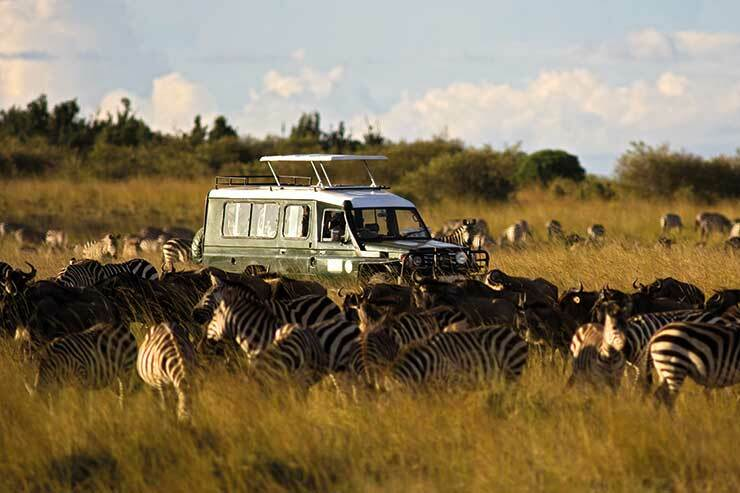 Trade summit added to the wildlife and safari travel show