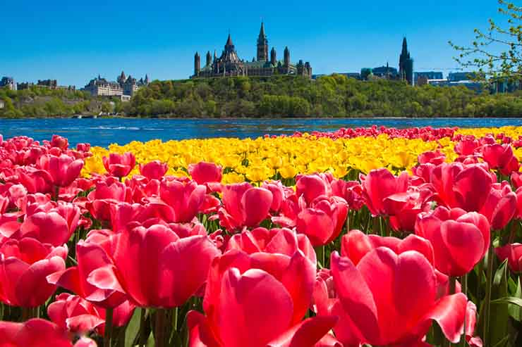 Win Love2shop vouchers with Ottawa Tourism