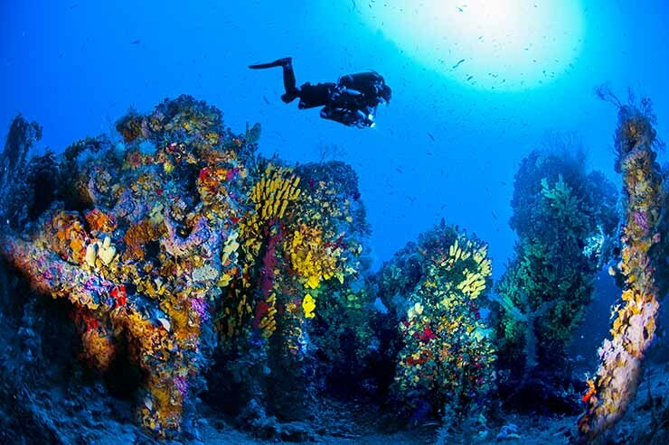 TTG - Travel industry news - 7 reasons why Malta is one of the best diving  destinations