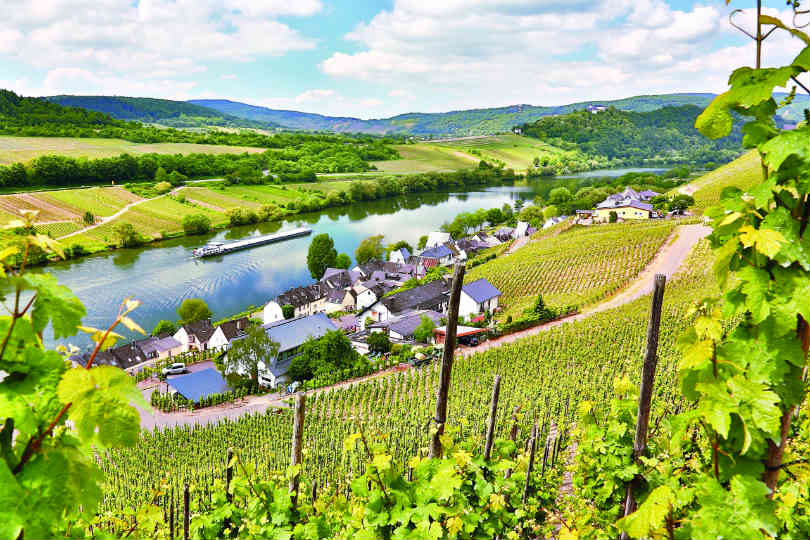 Arena Rail Holidays has a new six-day Walking the Rhine Valley Wine Trail tour