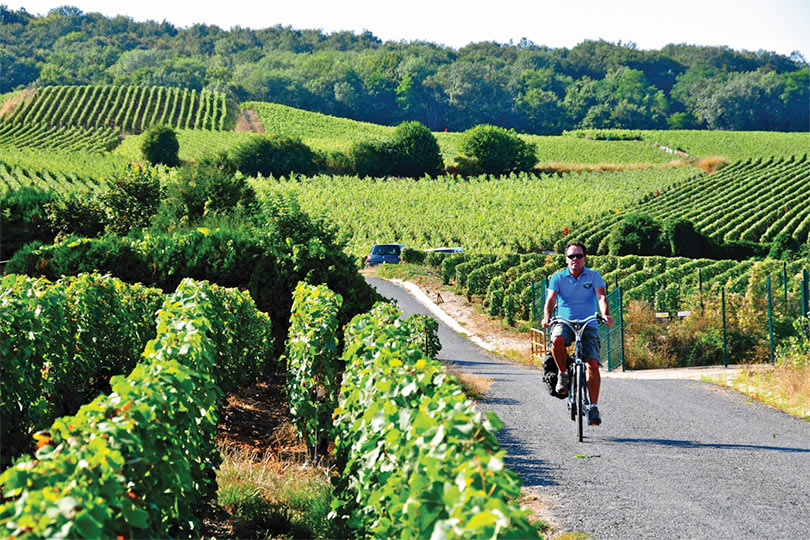 Visitors can explore vineyards by bike