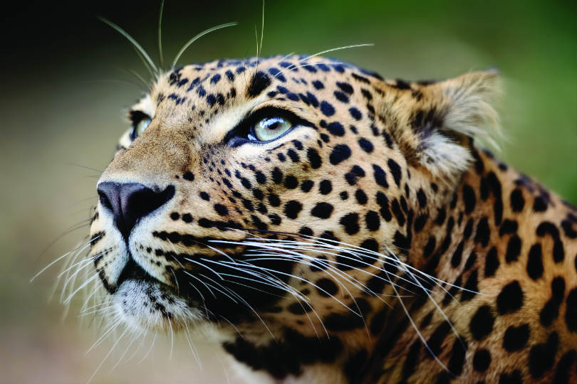 There are opportunities for animal encounters in Sri Lanka