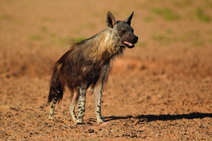 Wildlife Worldwide has launched a new Botswana's Rare Mammals tour