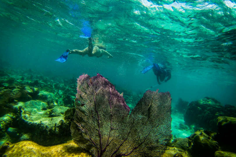 G Adventures has updated its wildlife trips for 2020. Snorkelling in the Barrier Reef