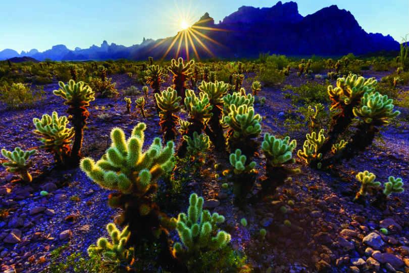 Arizona's desert landscapes are both a refuge and danger