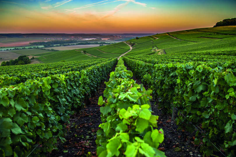 The Champagne region of France is famous for its fizz