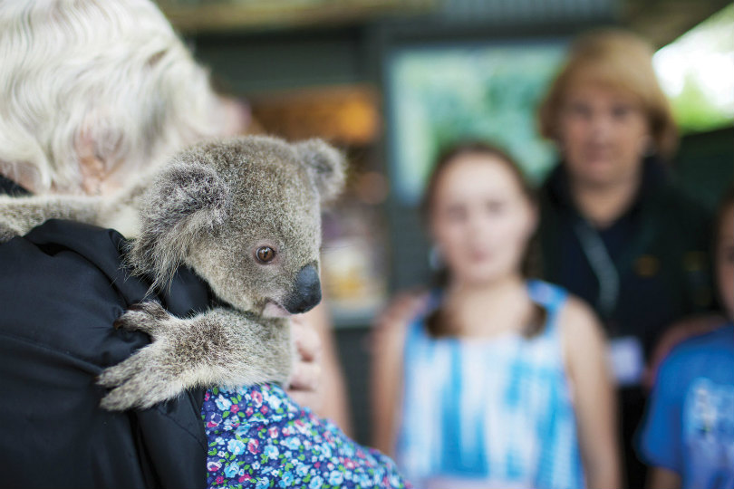 Tourism PR firm backs efforts to save Aussie koalas caught up in wildfires