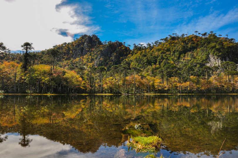Reserva El Cani near Pucon in Chile