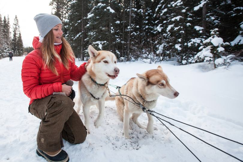 Dog-sledding with huskies is a popular winter activity in Canada