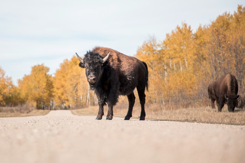 Clients can see wildlife in Riding Mountain national park