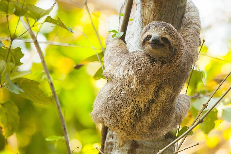1. Sloths